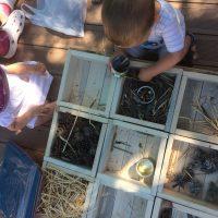 Création d'une maison à insectes